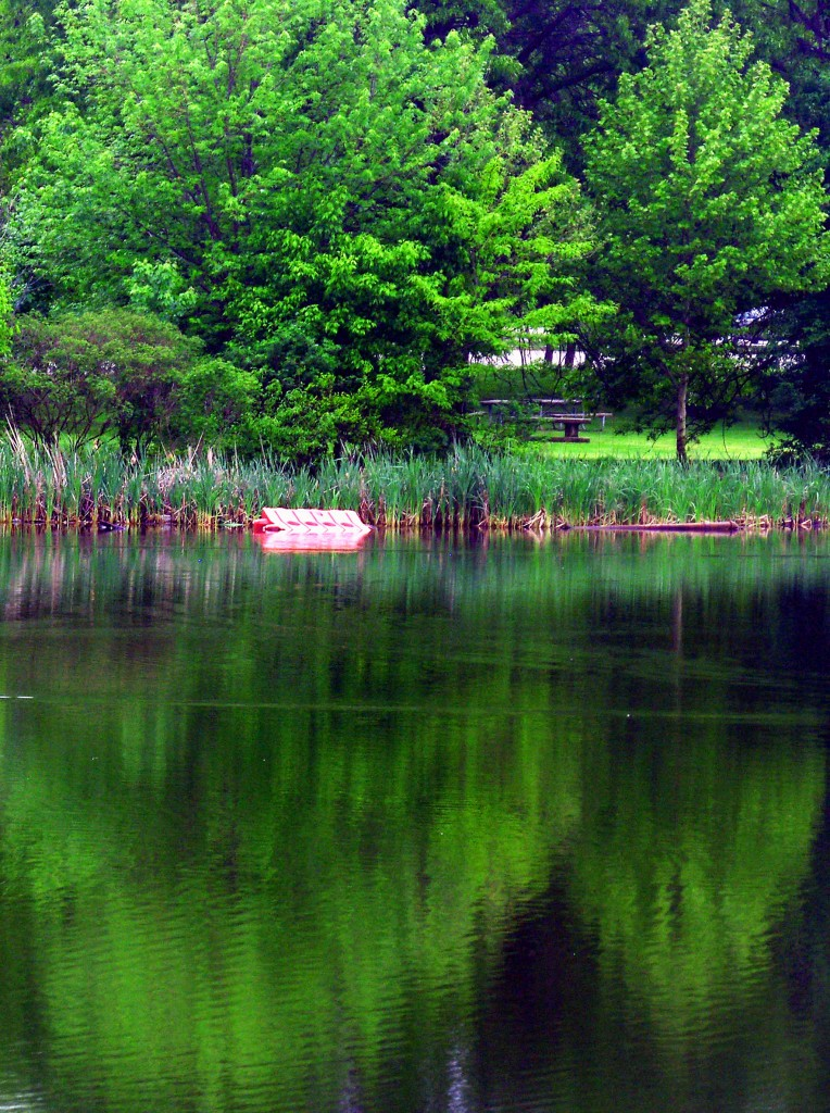 FDR Park Tree & Picnic Area Reflections