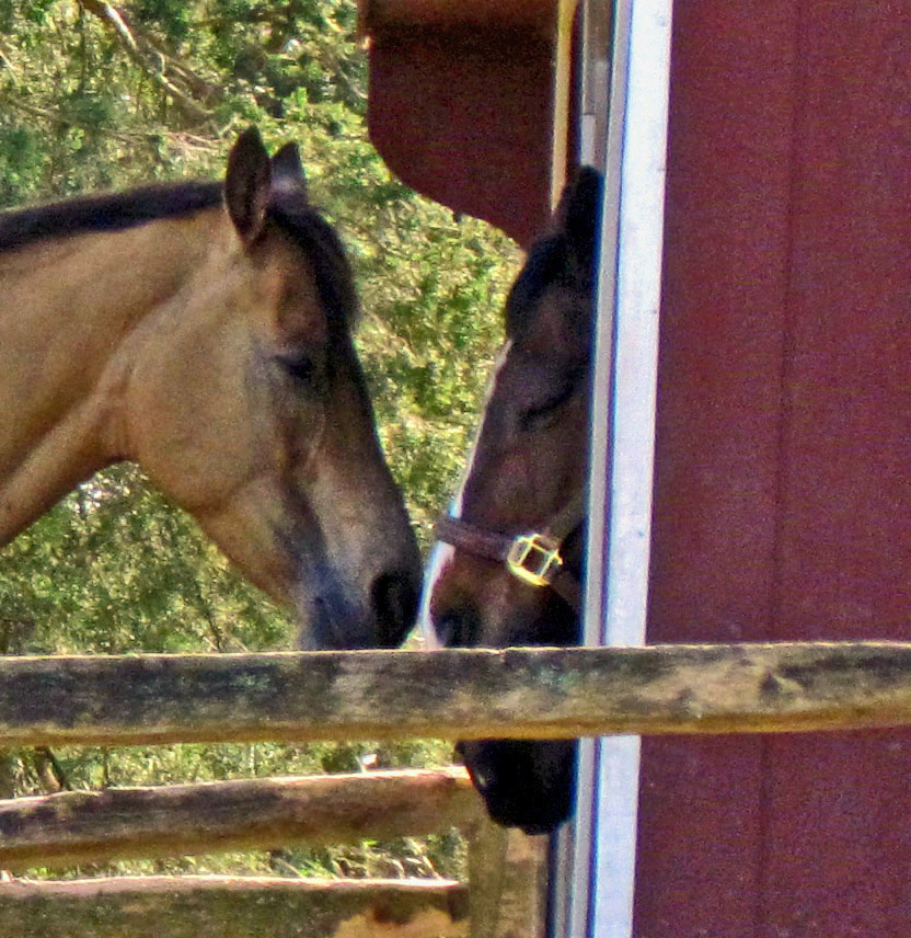 Horses Sharing A Quiet Moment