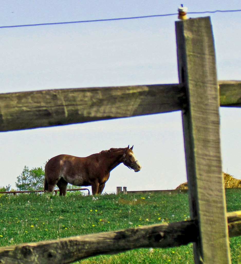 Lone Horse Behind Charged Fence