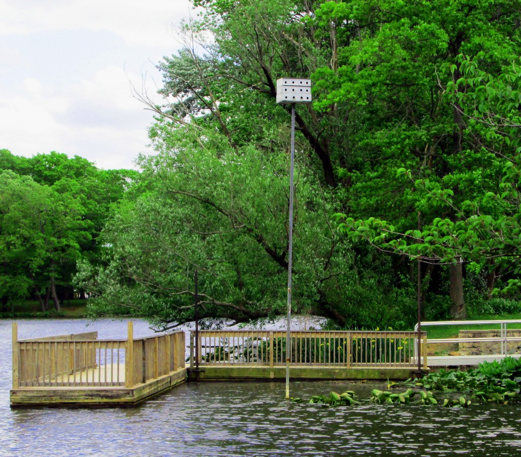 Purple Martin Bird Houses By Pier On Peddie Lake