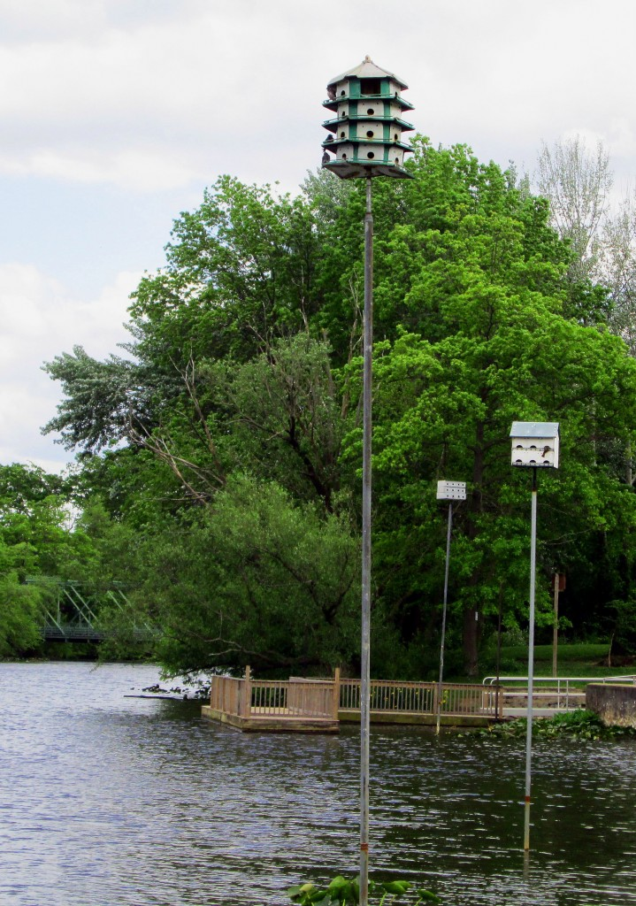 Purple Martin Sanctuary On Peddie Lake