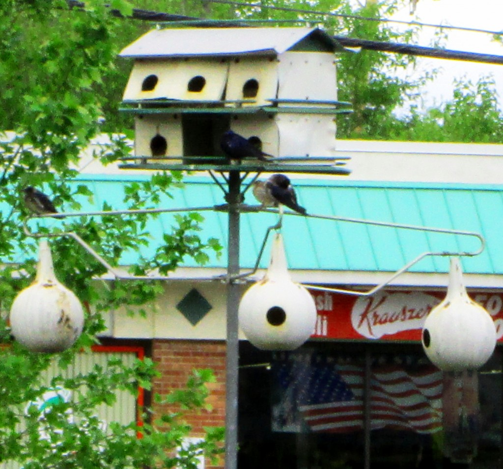 Unusual Bird Houses On Franklin Street In Highstown NJ