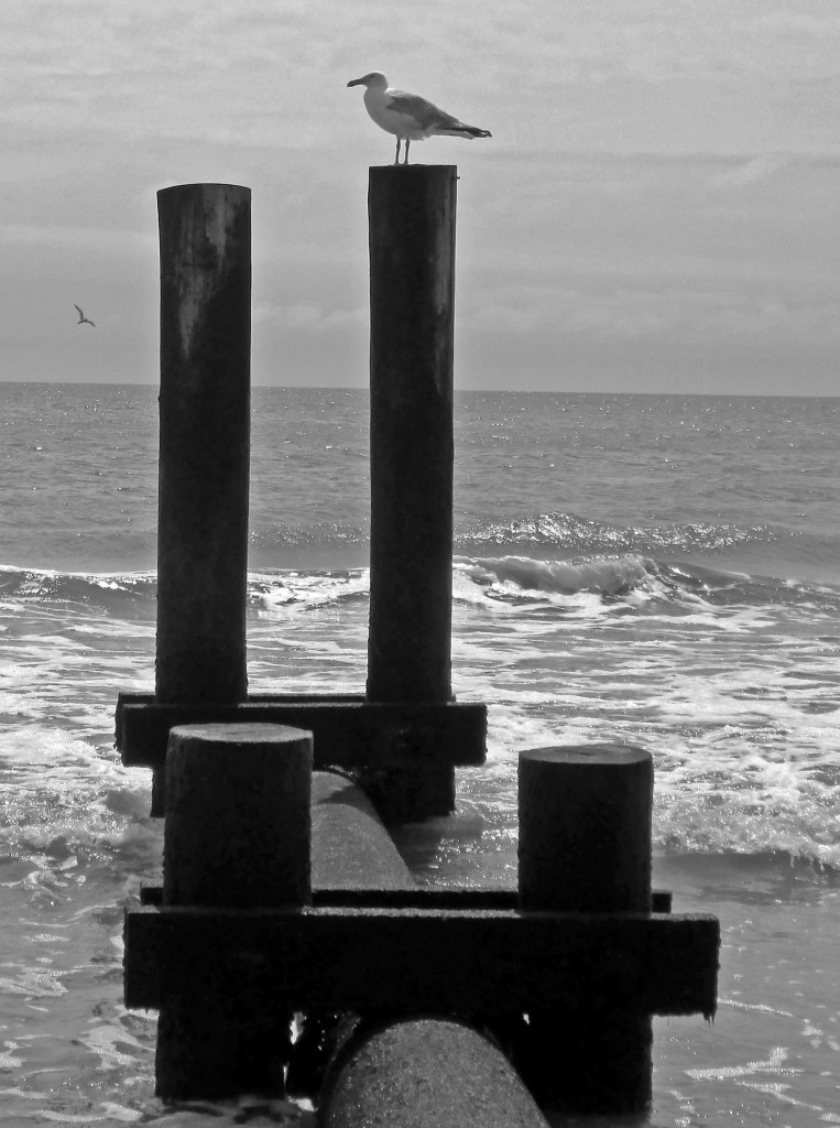 Black & White Of Bird Profile On Piling