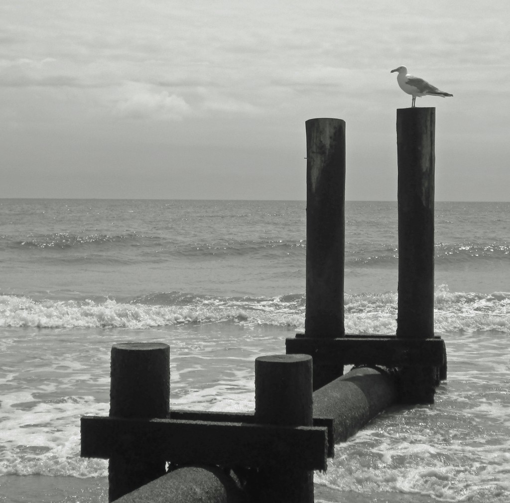 Black & White Of Gull On Jersey Shore Beach Piling