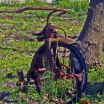 Old Rusted Tricycle In Yard