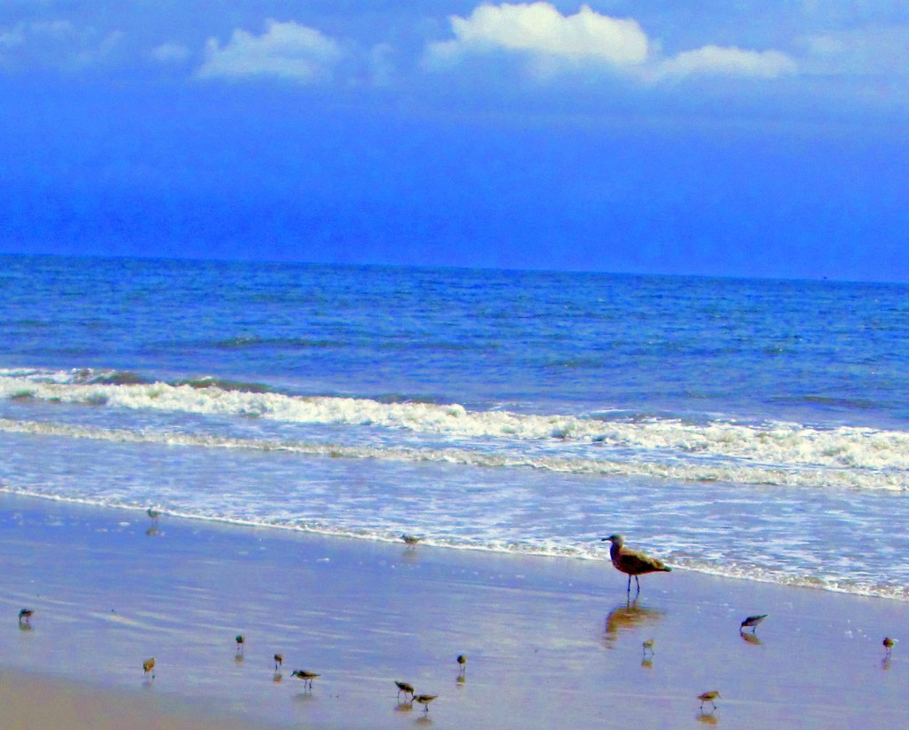 Sea Gull & Sandpipers On Jersey Beach