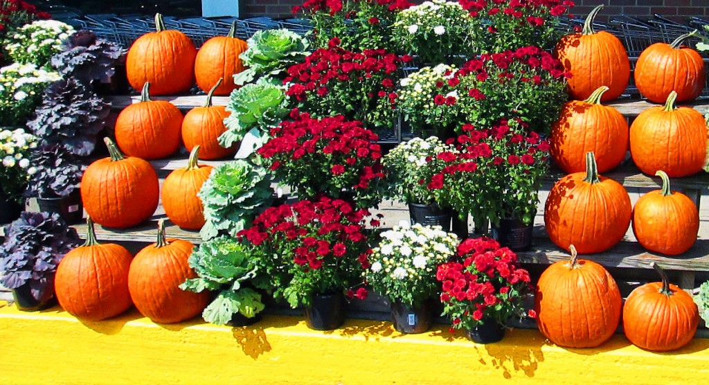 Curbside Fall Display Of Flowers Cabbage Plants & Pumpkins