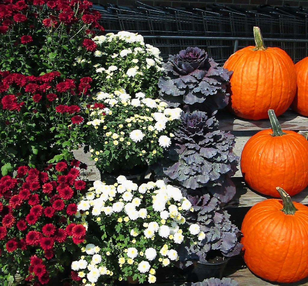 Mini Display Of Fall Flowers Plants & Pumpkins