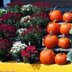 Retail Pumpkin & Flower Display
