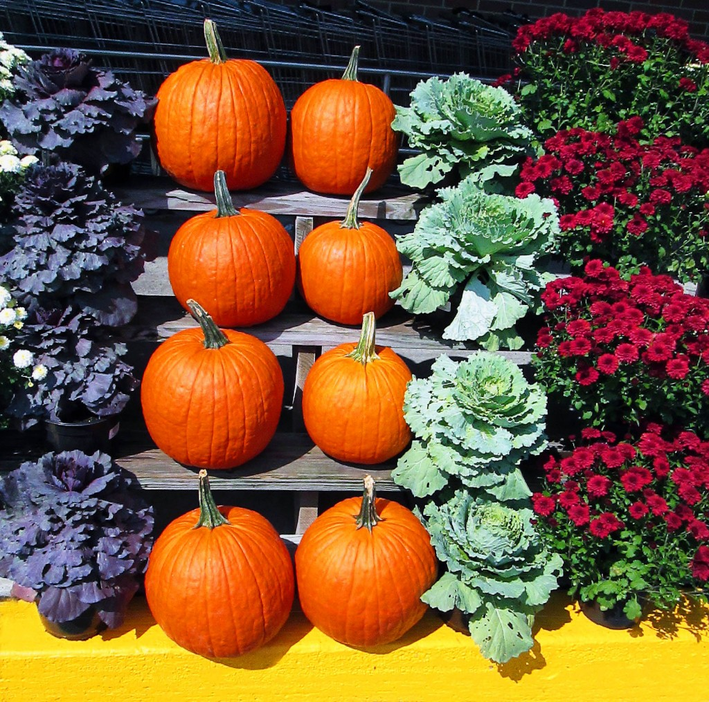 Supermarket Curbside Pumpkin & Fall Plants Display