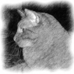 Kitty Cat Profile Photo Sketch