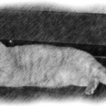 Lounging-Kitty-Pencil-Sketch