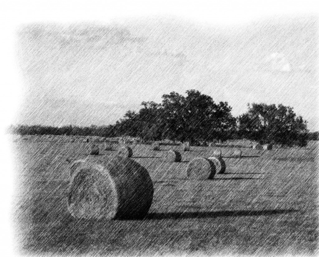 Pencil Sketch Of Rolls Of Hay In Ocala Florida