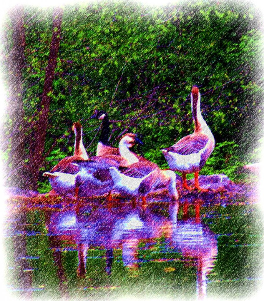 Photo Sketch of Geese Gathering Lakeside