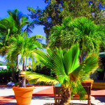 Potted-Palm-Trees-At-St-Maarten-Cruise-Terminal
