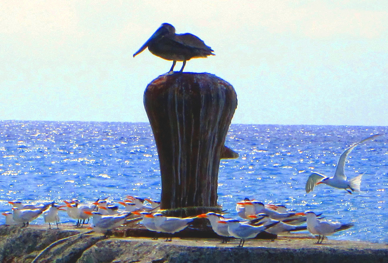 Bird Gathering In St Croix Bay On Pier Bollard