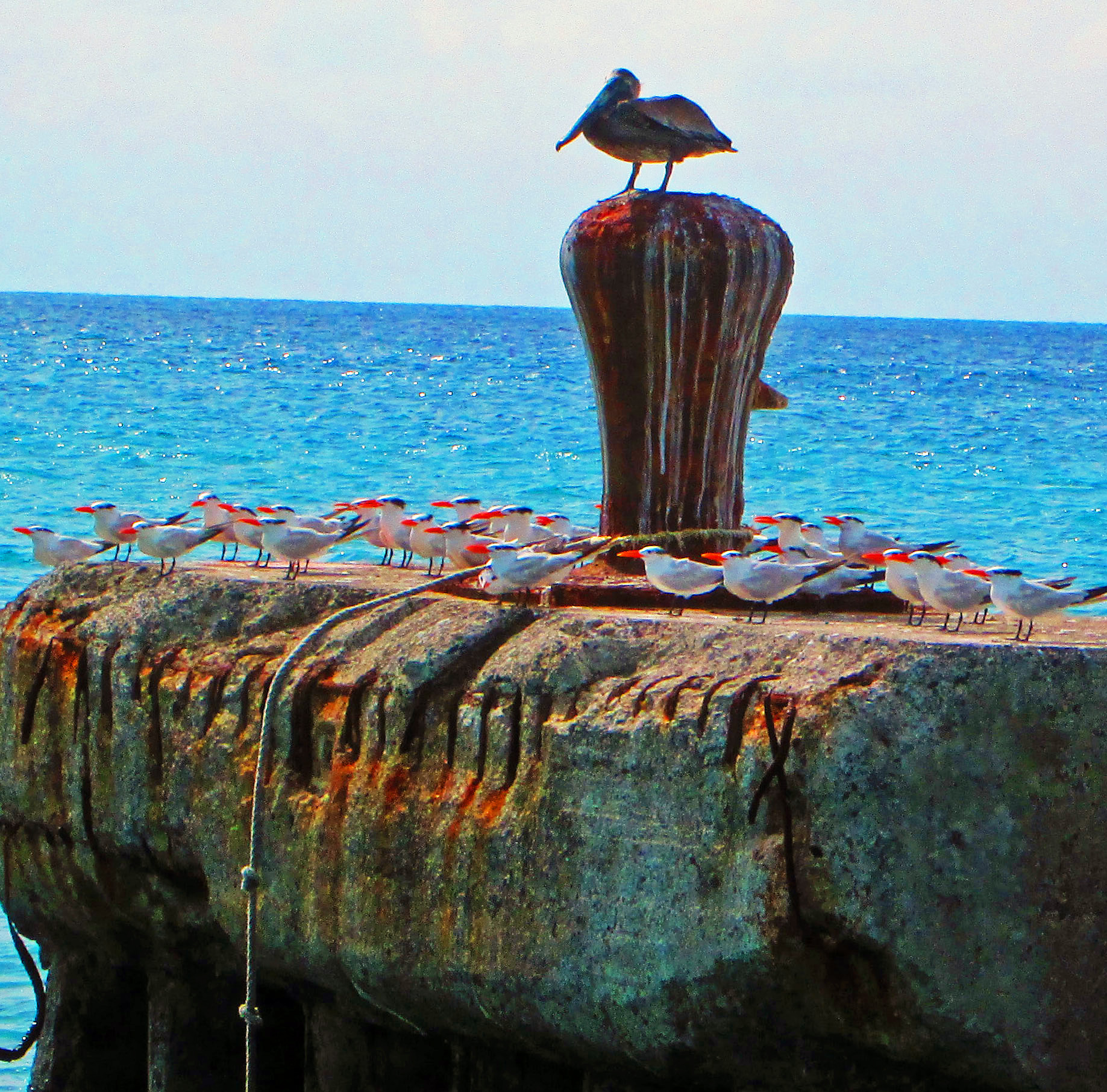 Birds On Anchor Bay Bollard Facing Shore In St Croix