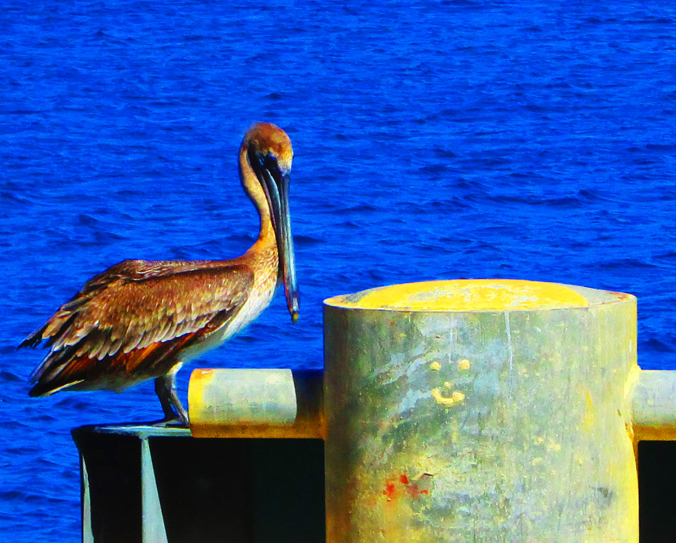 Pelican Bird On St Croix Pier Cushion