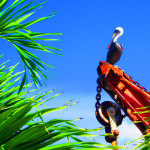 Pelican-Resting-Among-The-Palms