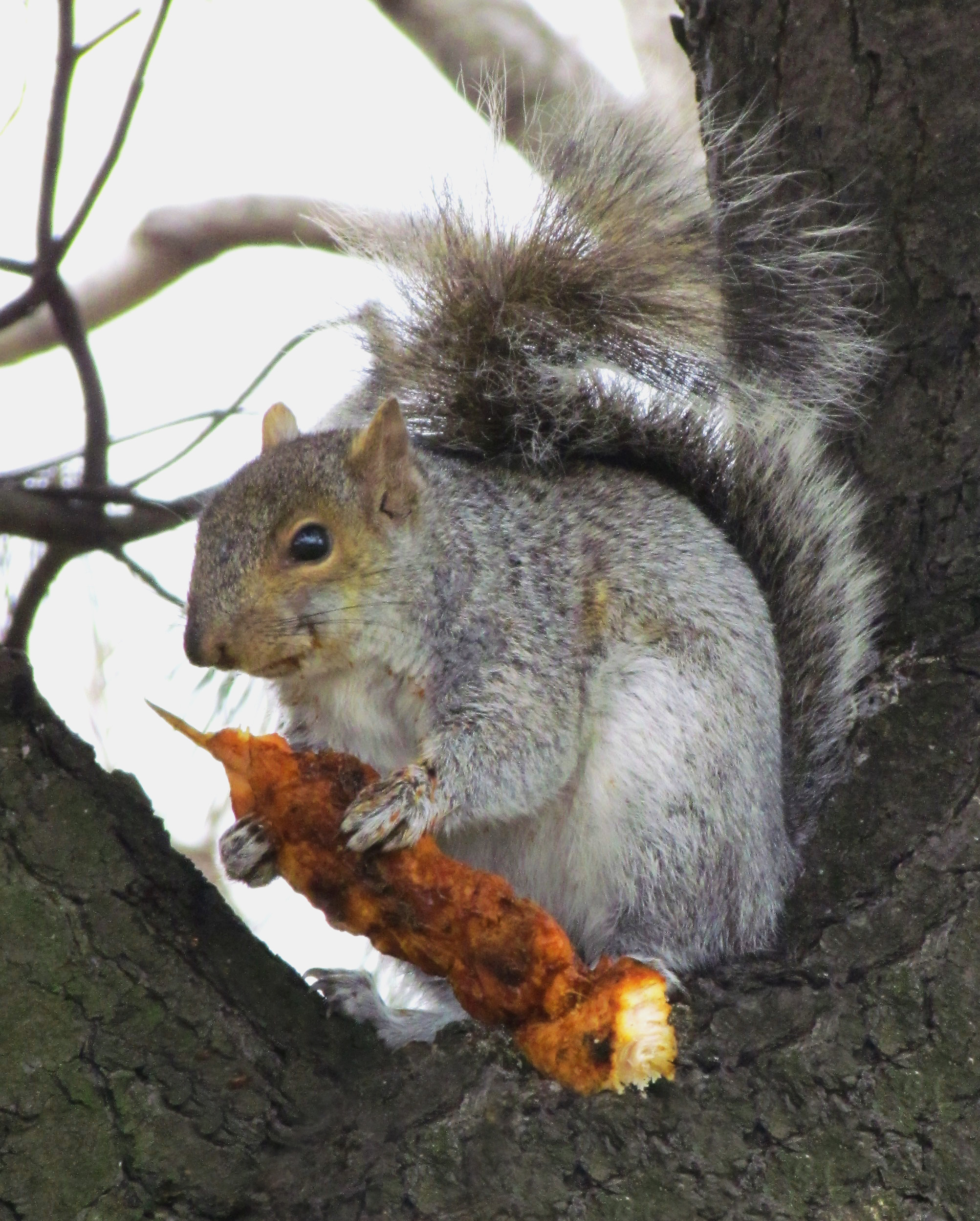 Prize Catch Of The Day For Philly Squirrel