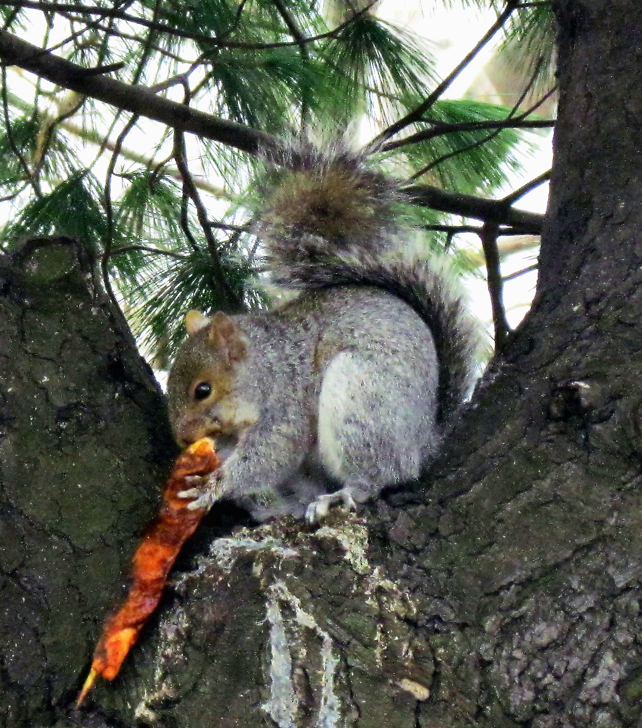 Shish Kabob Lunch For Philly Squirrel