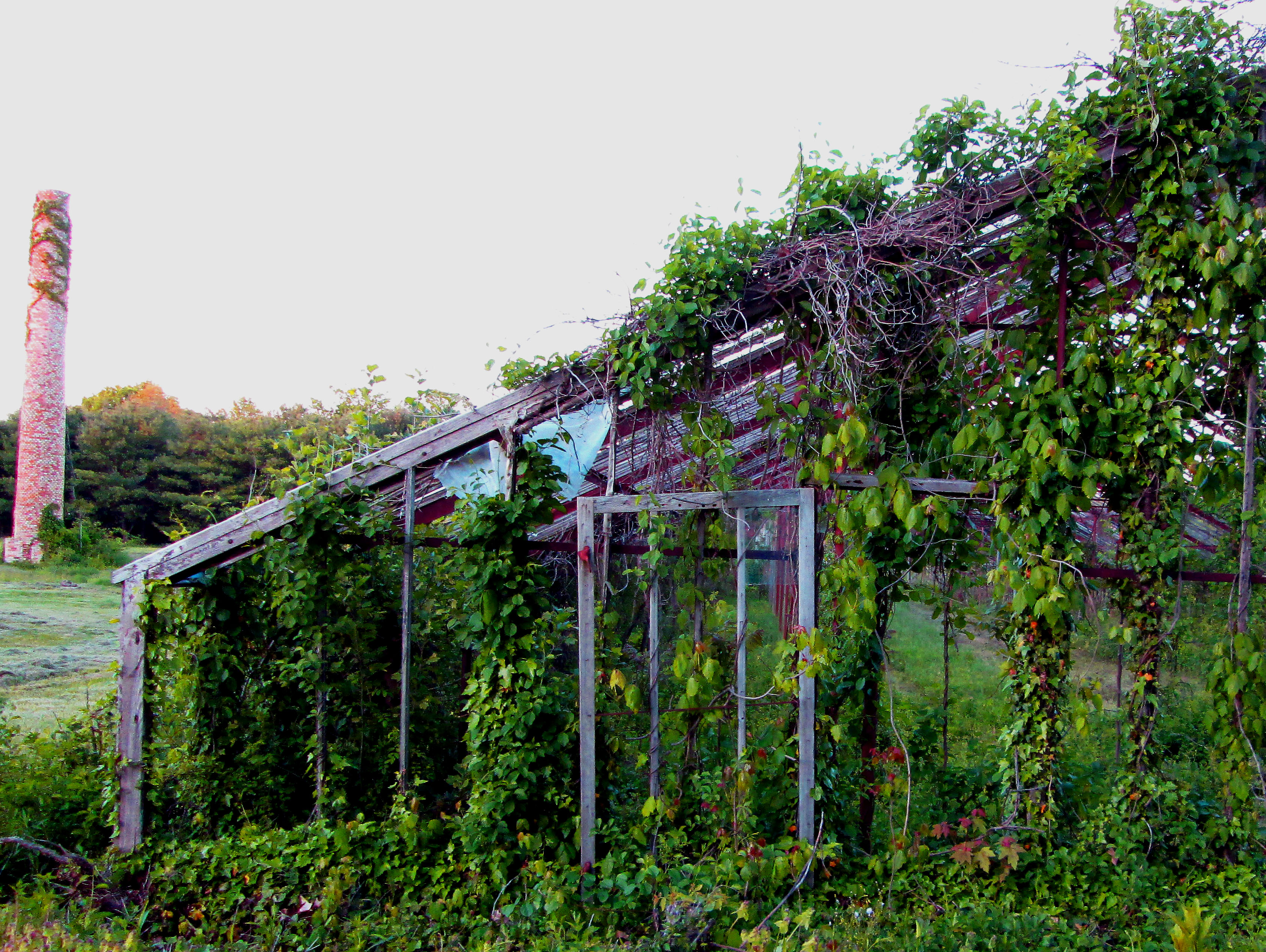 Abandoned-Green-House