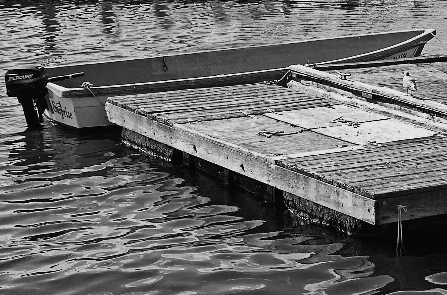 Black & White Floating Dock & Gull