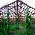Entrance-To-Abandoned-Greenhouse