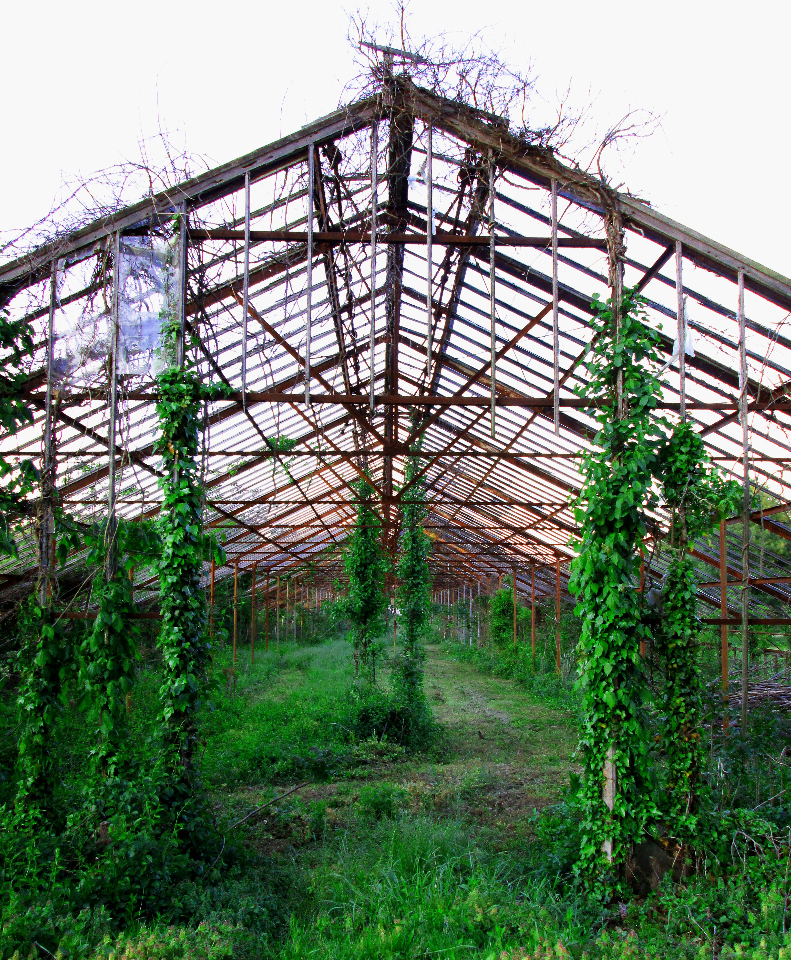 Entrance To Abandoned Greenhouse