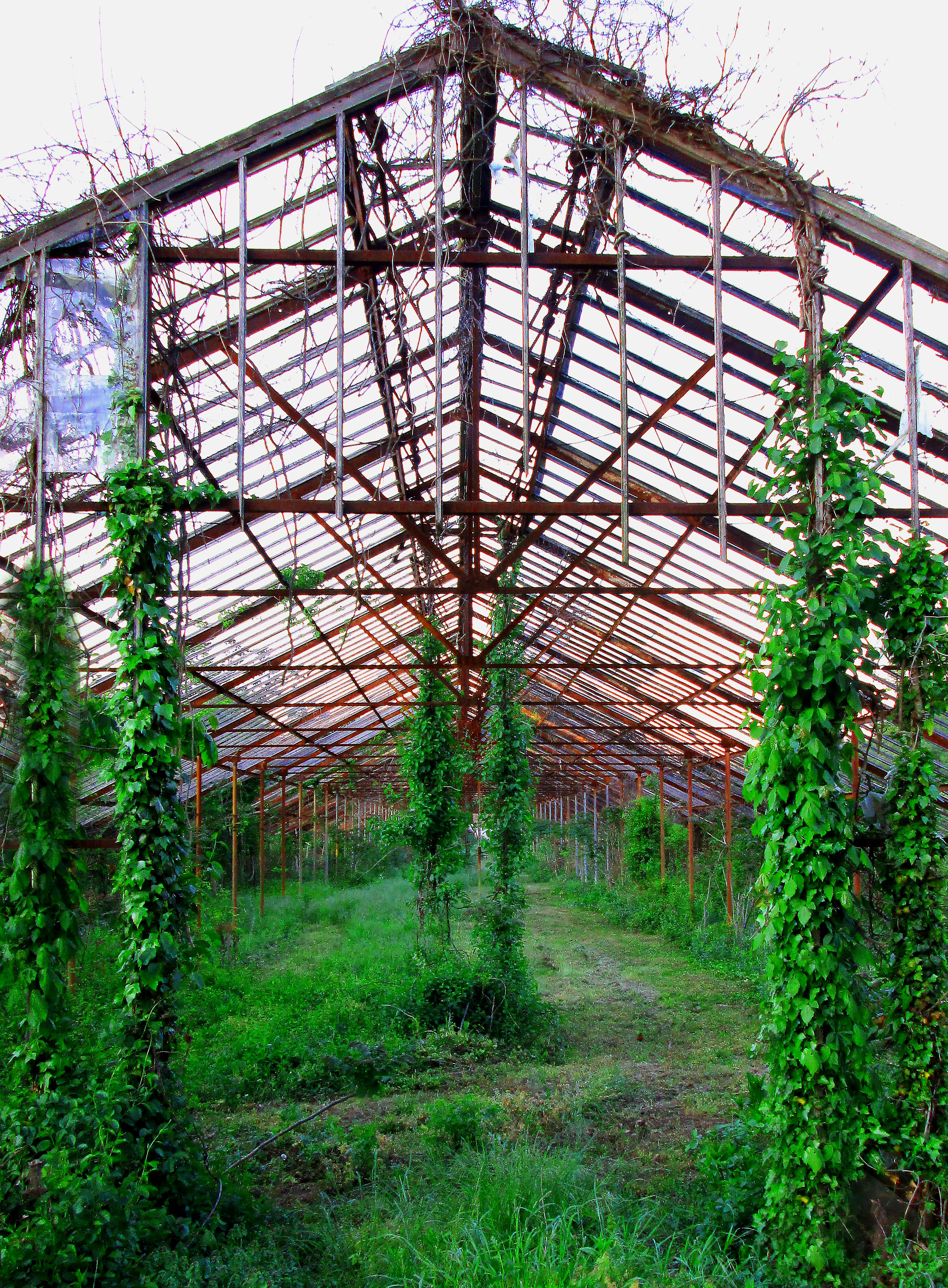 Old Abandoned Greenhouse In New Jersey
