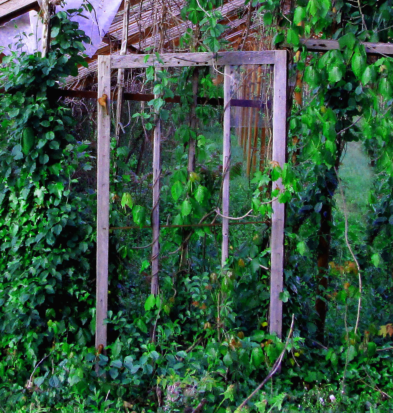 Old Greenhouse Window Frame