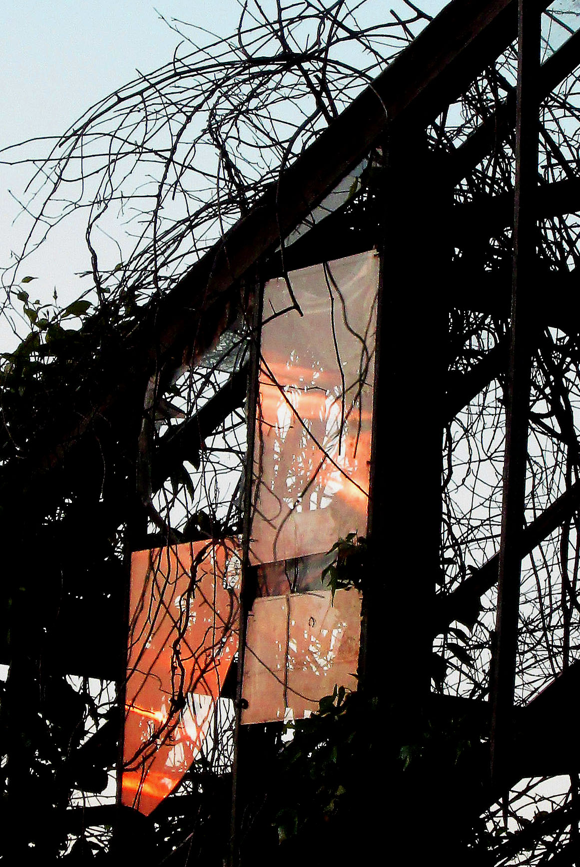 Setting Sun Reflection On Remaining Glass Panes On Jersey Greenhouse
