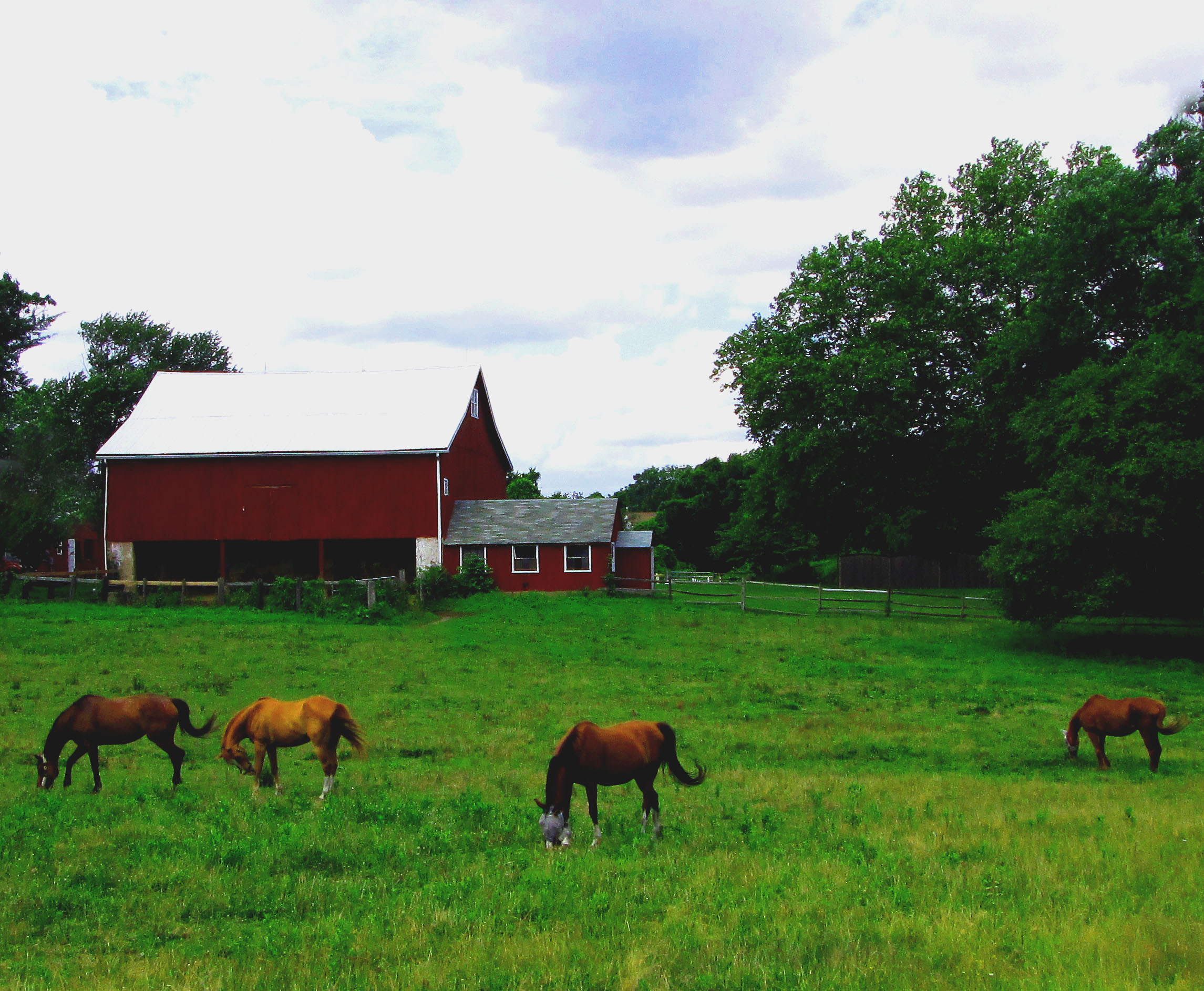 Horse Farm In Upper Southampton Bucks County