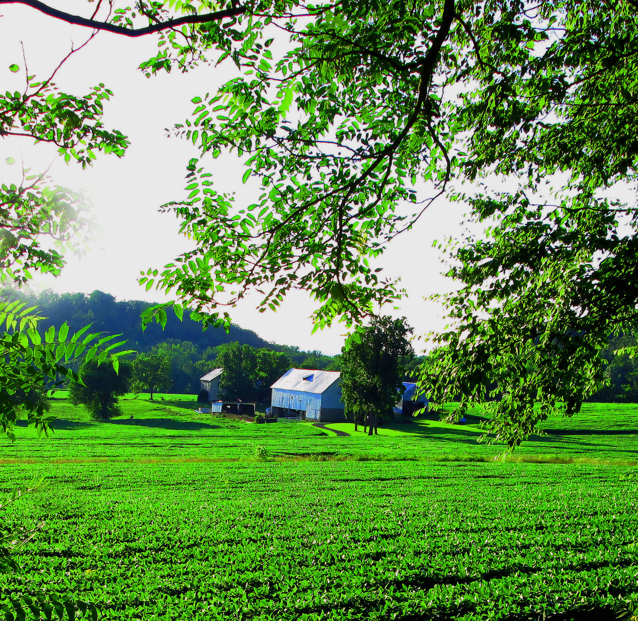 Berks County Farmland