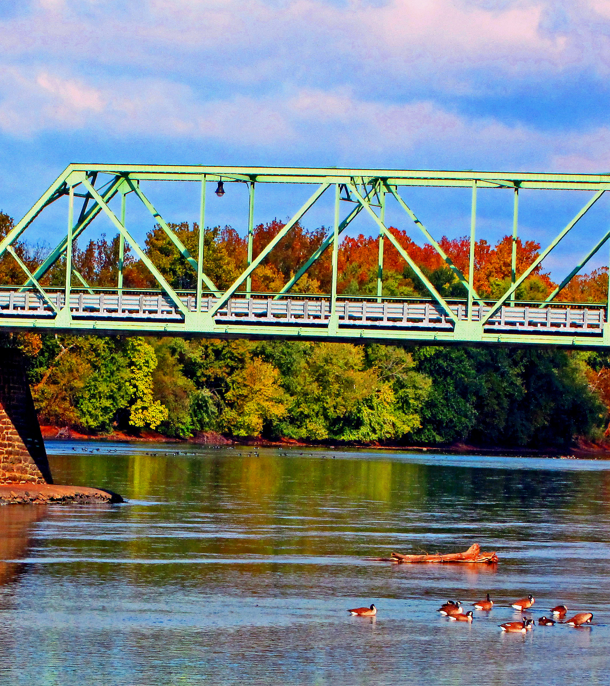 Canadian Geese Gathering On The Delaware River At Frenchtown