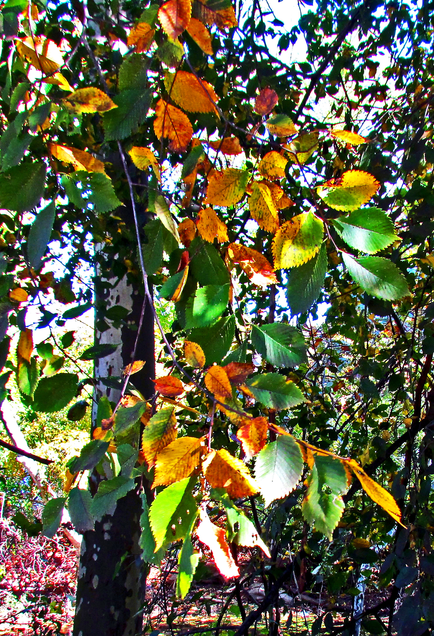 Leaves Changing Colors In Fairmount Park