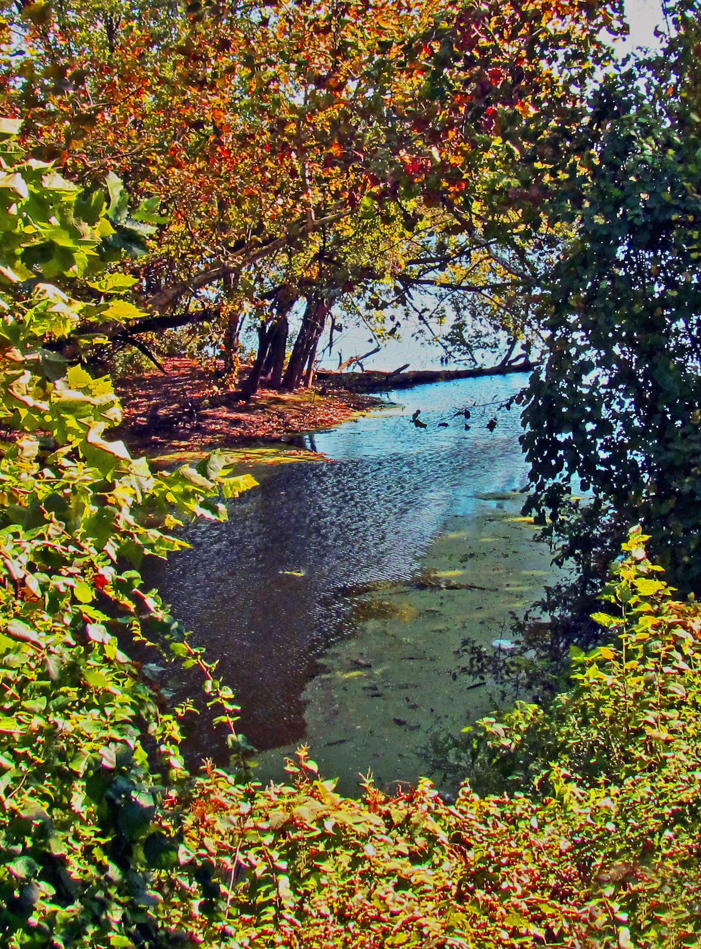 Schuylkill River Alcove Along West River Drive