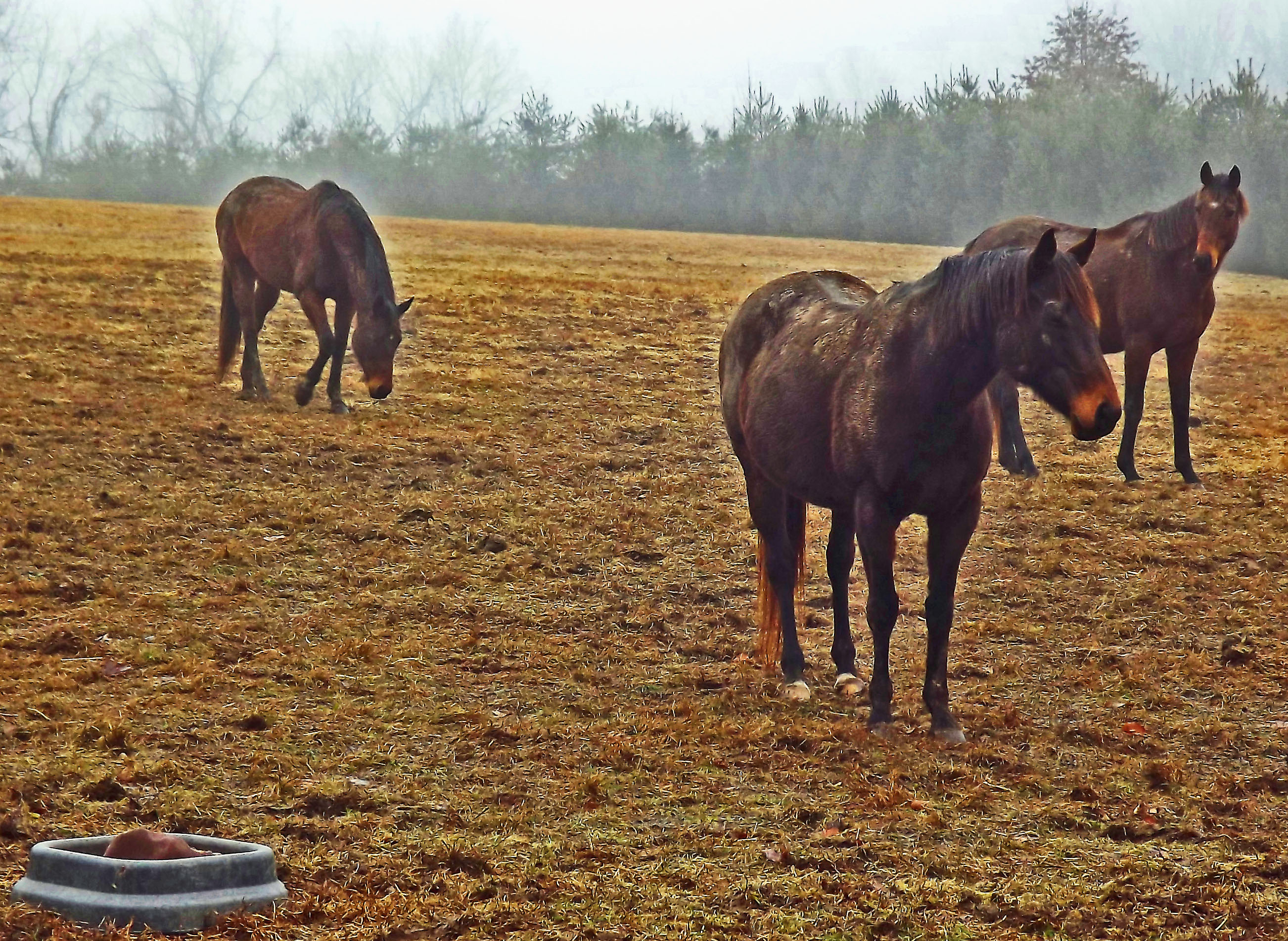 Aging Horses In The Field