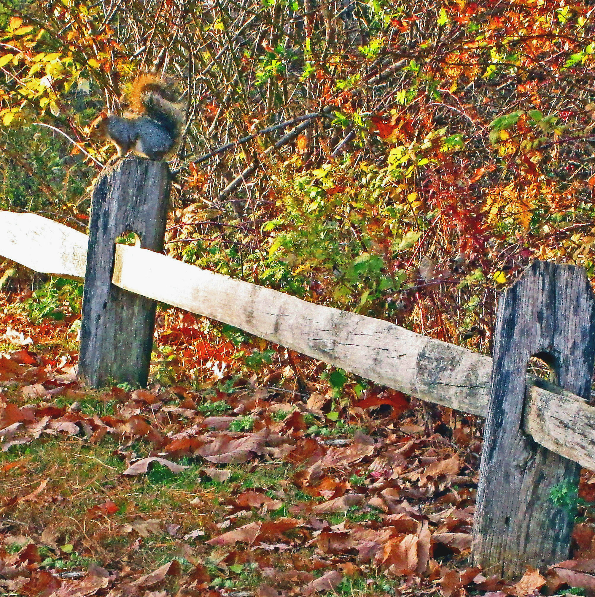 Fence Post Sitting