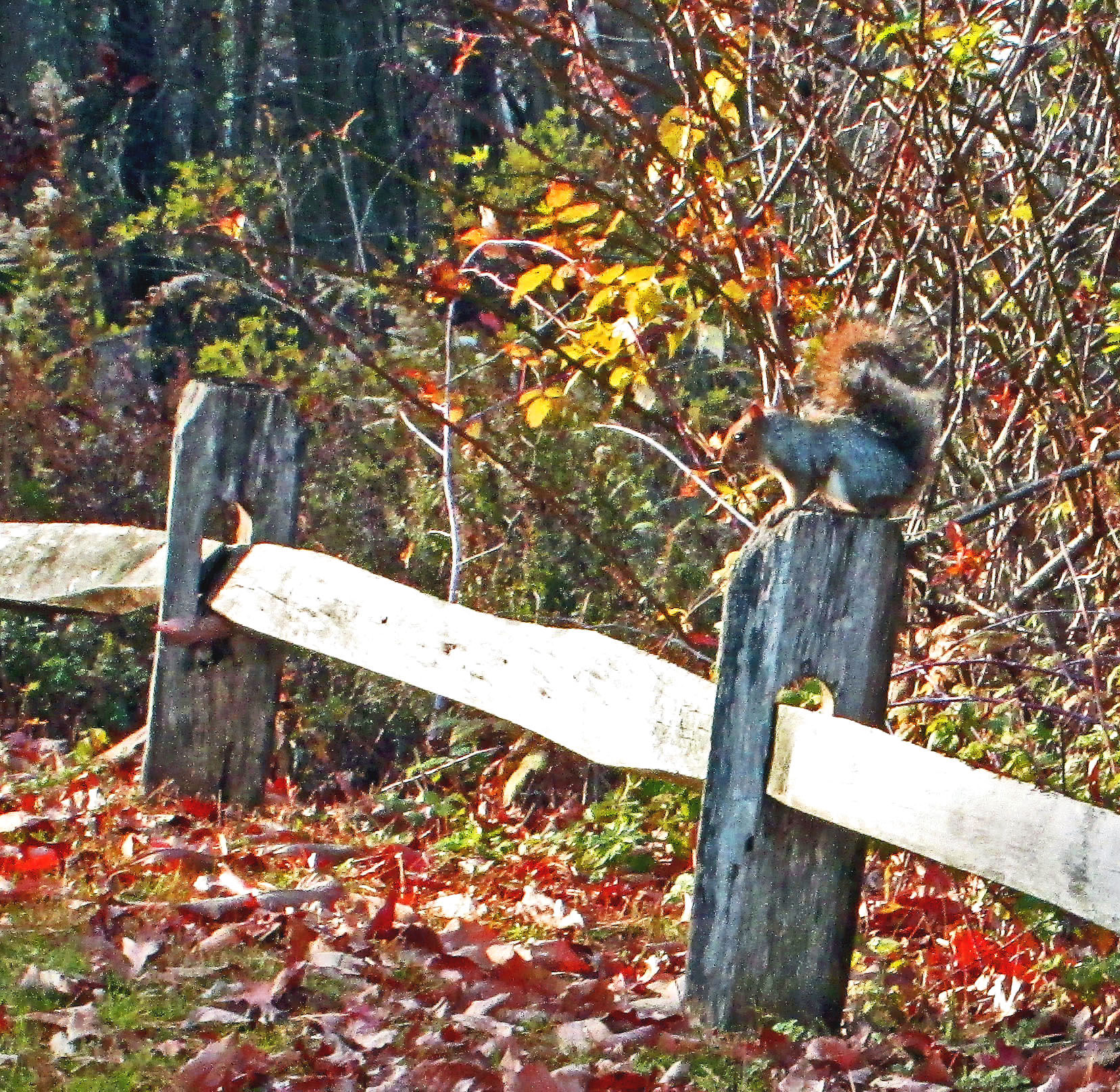 Squirrel At Manasquan Reservoir Environmet Center