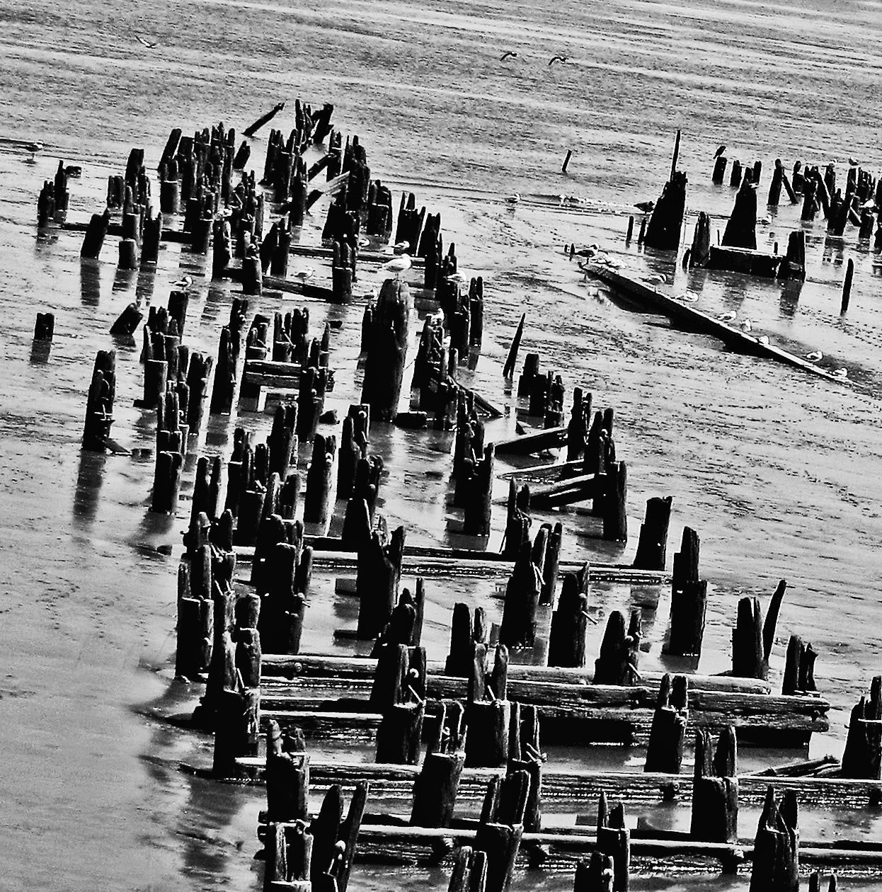 Derelict Pier Pilings On The Delaware River