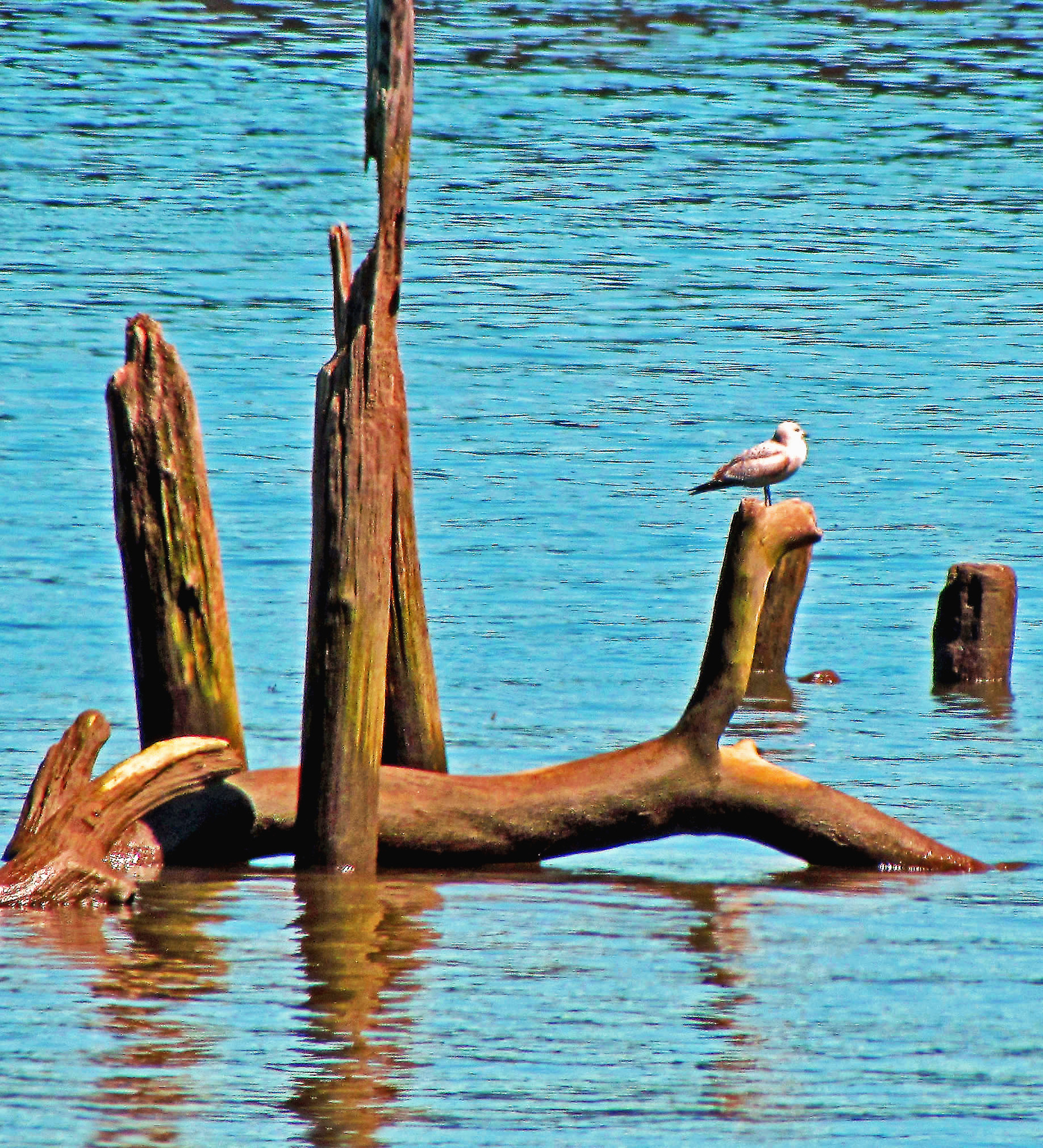 Perched On Driftwood