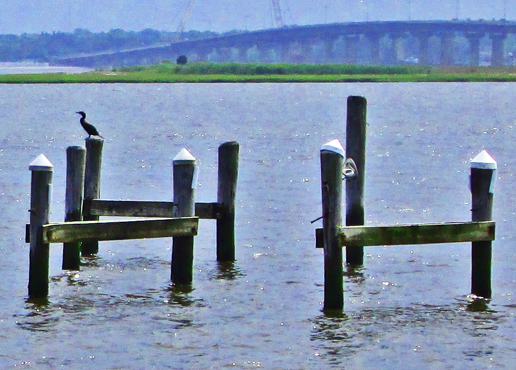 Heron On Piling In Great Egg Harbor Bay