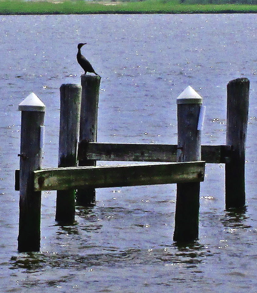 Heron Silhouette On Bay Piling