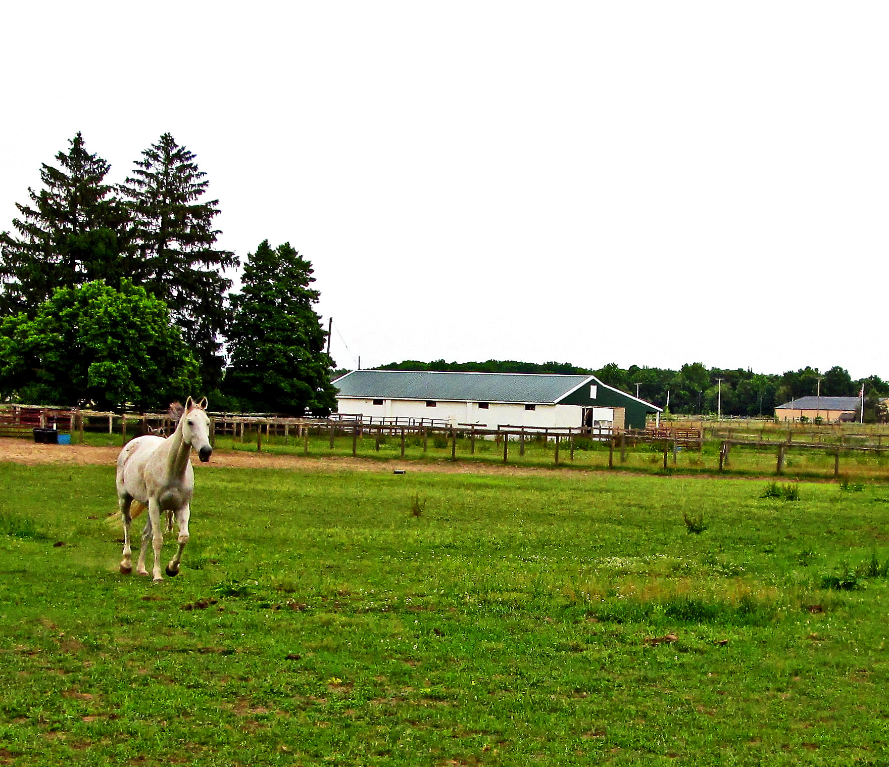 Trotting On The Farm