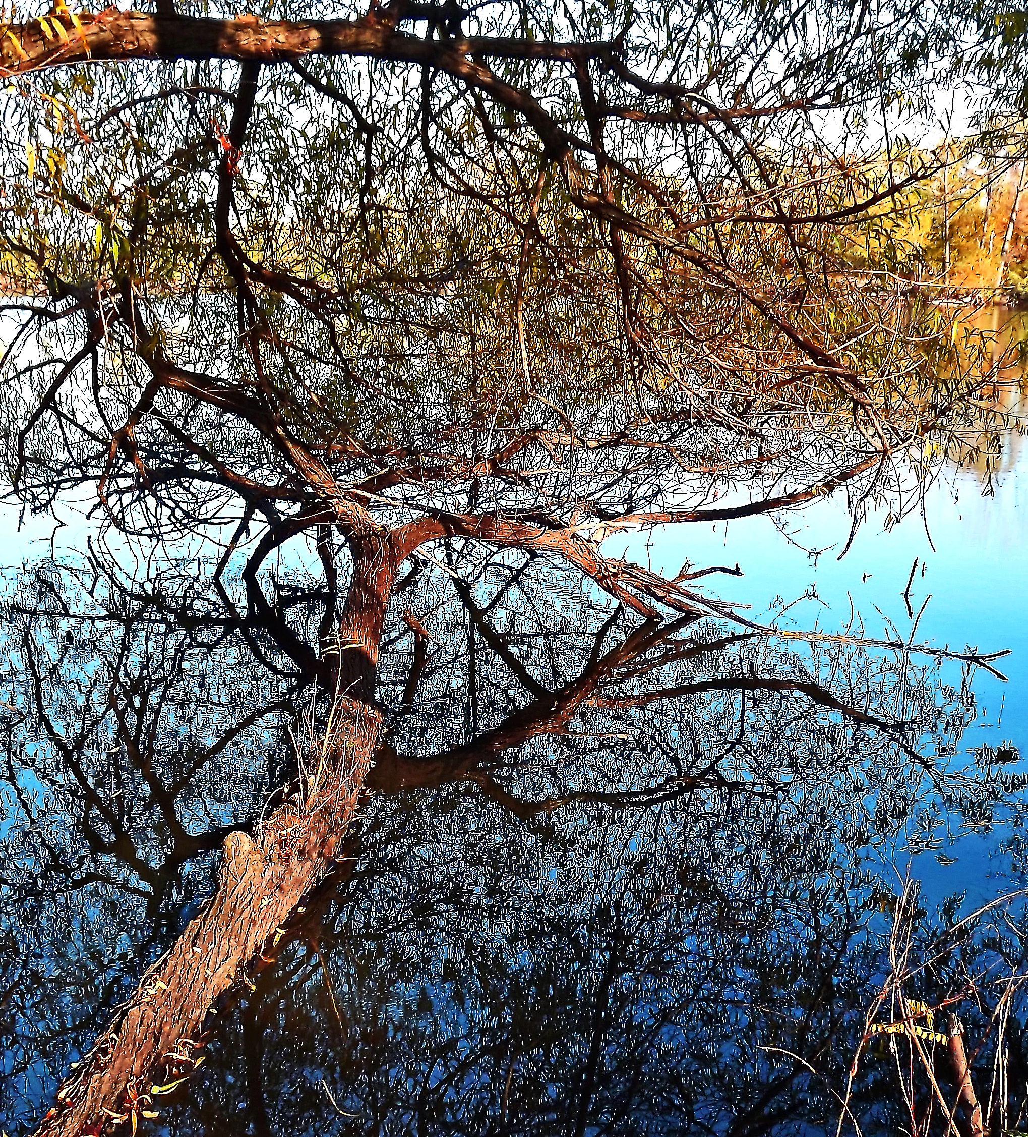 Tree Hugging Water Reflections
