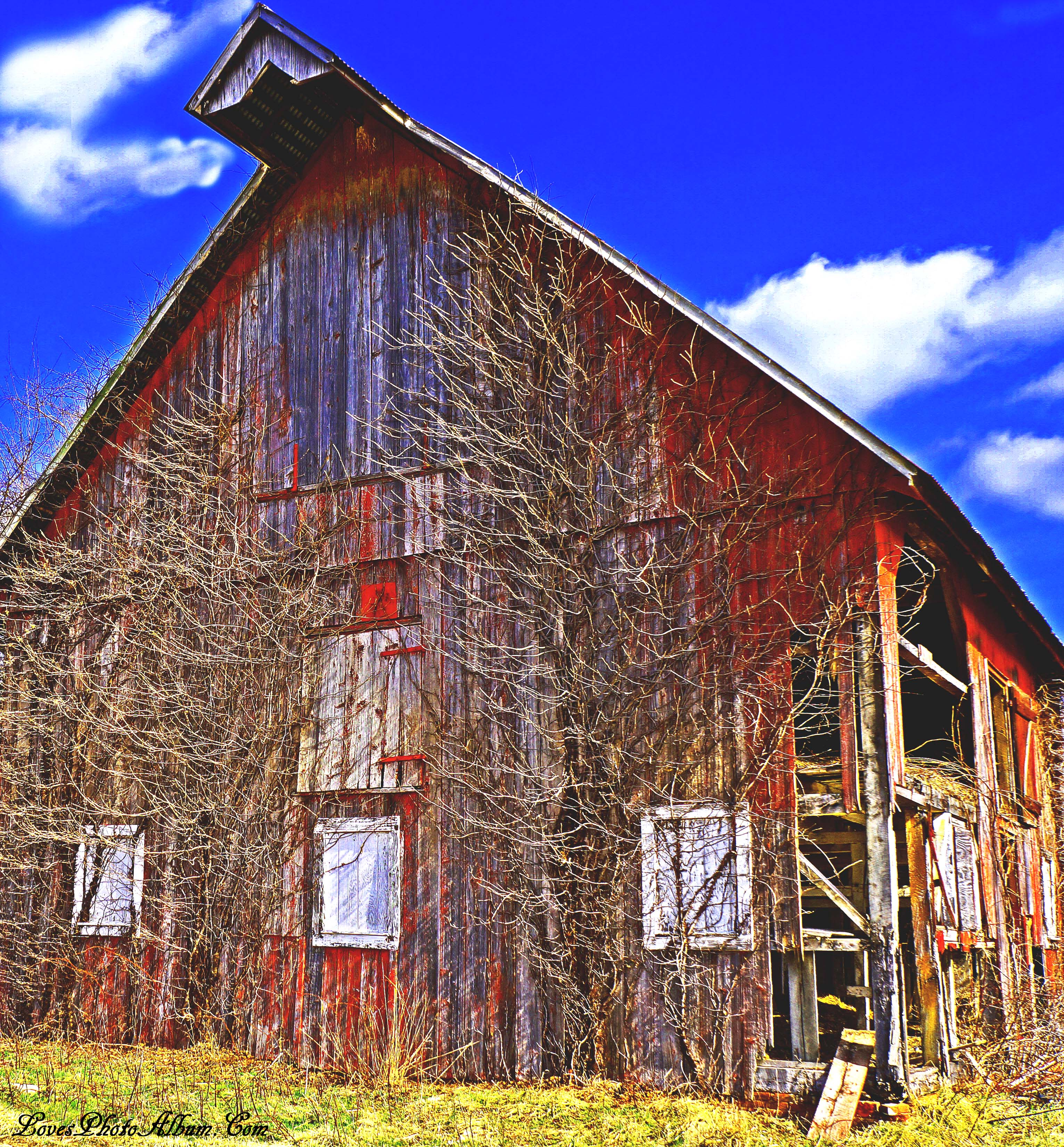 Vine Side Of Old Barn