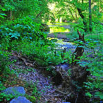 Wissahickon Creek Bank