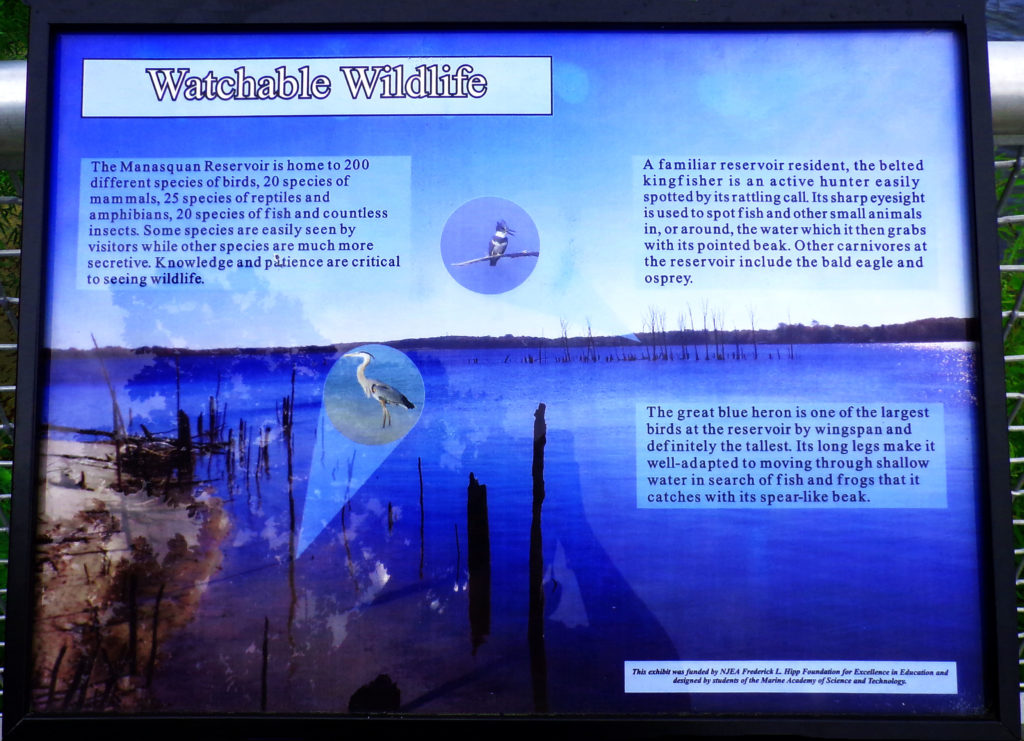 Manasquan Reservoir Wildlife Info
