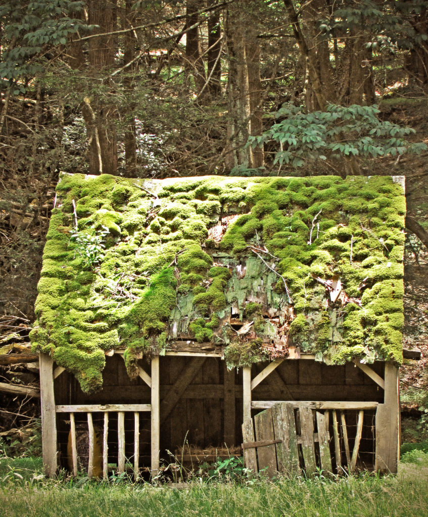 Moss Covered Sheep Shed